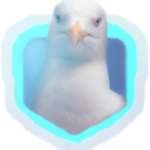 A_Seagull Net Worth